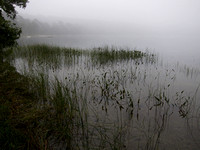 moody pond - waiting for Irene